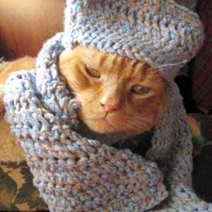 ロシアの帽子じゃありません、猫です😺