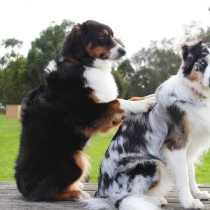 俺「お手」犬「はむ」俺「許す」😂