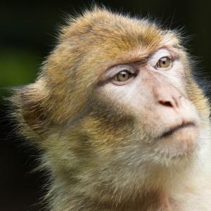 猿を追い返そうとバケツを叩いてたら…