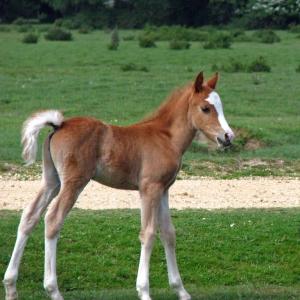 生まれて1ヶ月のお馬……お人形か…………🐴