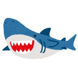 打ち合わせの時間を間違えて困ったようなサメが撮れたwww