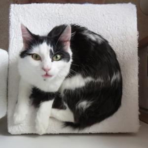 まぁそんなことより実家の猫が超四角いから見て