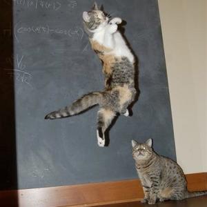 ぼてっ。重力に逆らえない猫😹
