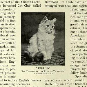 「うちの猫が新聞にのった」って言って母親から送られてきたLINEがこれ。