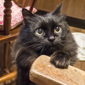 我が家の玄関では、黒猫ミーティングが行われておりました
