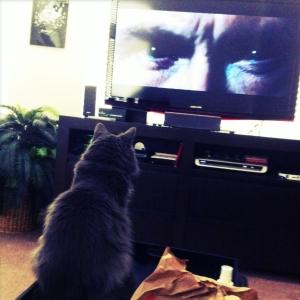 最近うちの猫が勝手にテレビ見るようになりました。。