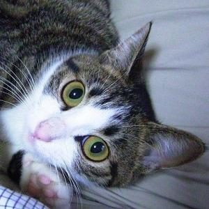 21世紀になって猫リセットに怯えるとは……😸