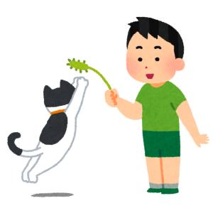 うちの猫の身体能力が高すぎてねこじゃらしで「じゃれる」レベルを超えて「競技」の域に入ってる
