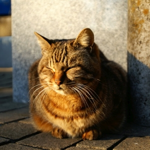 なぜ、猫の額をボフボフ💨ドリブルしたくなるのだろう…