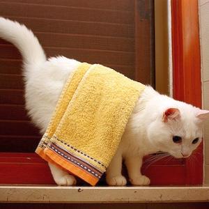私のタオル… 😅