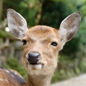 奈良の鹿、あまりの寒さに耐えきれずスゴイ状態にw