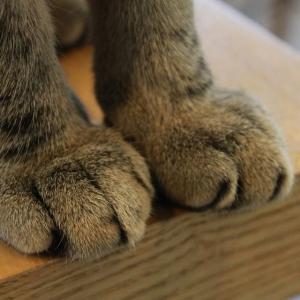 爪切りを覚悟したうちの猫の表情wwwwwwww