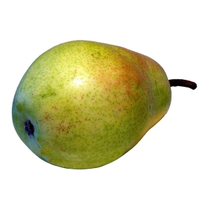 あまりに激おこプンプン丸な洋梨が発見されるwww