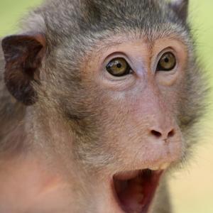 【マジか】「都内で猿が目撃されたらしい」「ほーん。さて洗濯物取り込むk…!!!!!」