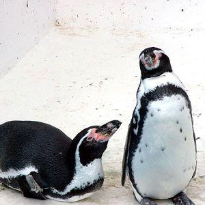 TV「雪道はペンギンのように歩こう」→コレをやれって事かよww