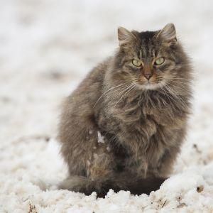寒くてもかわいさは埋もれないアタシ😽