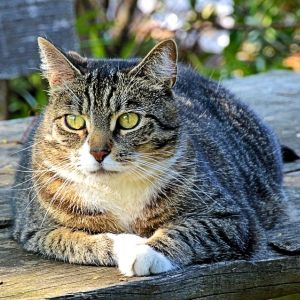 二本足で日光浴する猫があまりに神々しいwwwww
