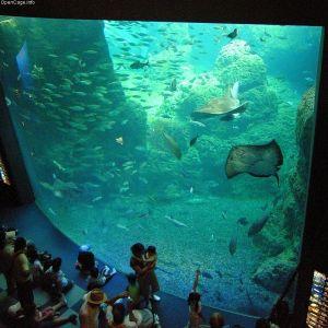 ある水族館の「これぞ日本!」な仕掛けが話題にw