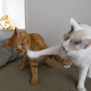 たるむ肉、舞い散る毛。スローモーションで見てもカワイイ猫の喧嘩😸