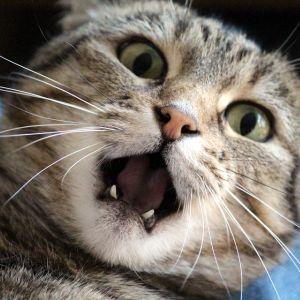 「それでも君は猫になりたいか!?」家猫視点の日々を描いた漫画に「確かにw」「ごめんよ」と反響多数