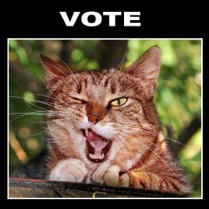 選挙ポスターの顔写真みたい😸