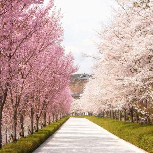 日本に四季があってよかった! 「動物の春夏秋冬」写真あれこれ