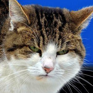 ここまで「勘弁してほしい」という猫の顔はそうそう見ない😾