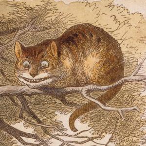 山の中探検してたら猫が道案内してくれた💁