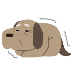 昼寝から目覚めて喉を潤す老犬の優雅なことよ。