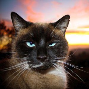 お風呂に入れられると分かった時の猫の顔です🐱