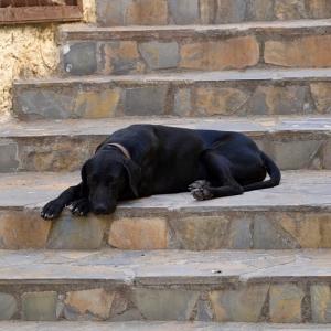 うちのワンコ、階段の登り方のクセが強いwwwww