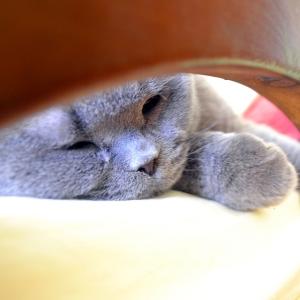 一日かけて作った「猫ベッド」を見た猫の反応😭
