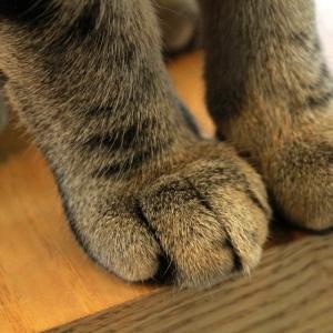 【完全一致】うちの猫の足が何かに似てると思ったら…コレだー!