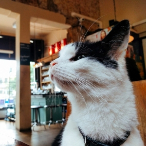 「ねこ居酒屋」行ったら猫が代わる代わる接待してくれて完全にニャバクラ😽