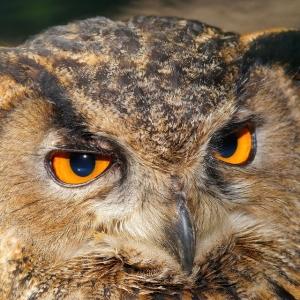 フクロウがじっと見つめてくれてる!と思ったら…😅