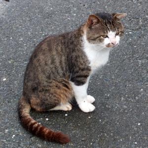 さすが田代島、「上陸した猫好きがまず最初に欲しい情報」が解ってるww
