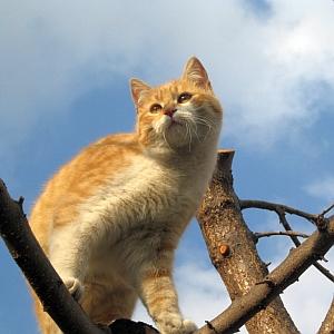 体を洗われているうちに無我の境地に達した猫さんw