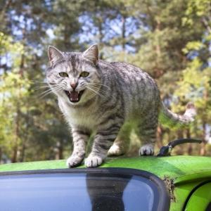 3日前に洗った俺の車…こんな酷いこと…いったい誰が…ッ!!