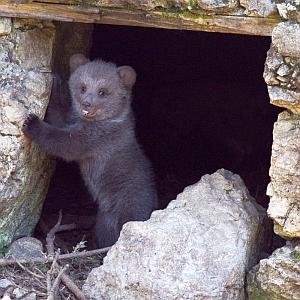寝苦しいと思ったらカワウソが洞窟探検してた😅