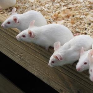 ピカチュウは最初ネズミじゃなかった…!? 当時のデザイナーが衝撃的事実を明かす