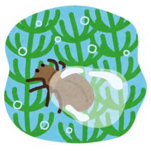 水中の巣に運ぶ空気を一瞬でパッキングする「ミズグモ」が凄カワイイ