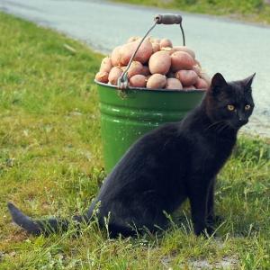 猫さん、ピザポテトと一体化してしまうwww