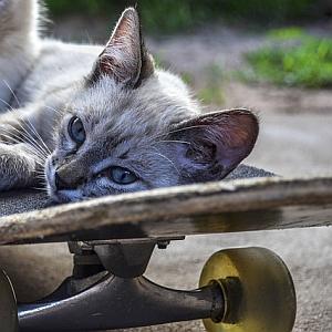 お客様 !困ります!猫の乗車はお断りしております! アッー!お客様ー!