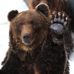 秋田県某所に設置された「熊出没注意」の看板、説得力ある…