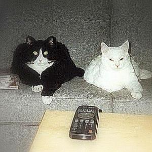 TVが「政治ニュース」から「サッカー」に切り替わった瞬間の猫のリアクションをご覧下さいwww