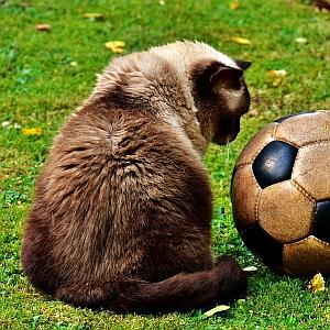 うちの猫、サッカー応援中に「あの選手」の名前に反応しすぎてつらい😅