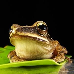 人生の酸いも甘いも噛み分けたような表情のカエルが発見されるww