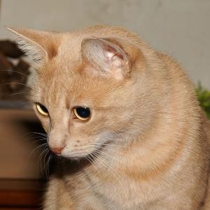影までカワイイ…甘えんぼな猫さん😍