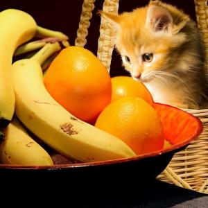 この八百屋の看板猫、完全に自分をバナナだと思ってるwww