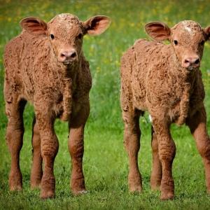 すげえ・・・双子はたまに見るけど「三つ子」は初めて見た😳